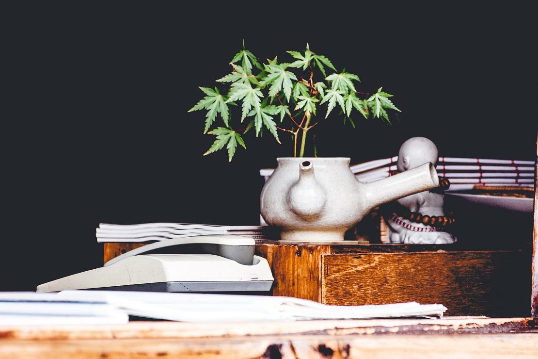 Legalizzazione della Cannabis in Italia al 2018: a che punto siamo?